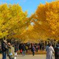 秋の紅葉シーズンは国営昭和記念公園デートを楽しもう!